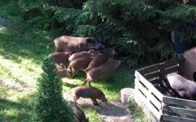 Zwierzęta na Brzezinach