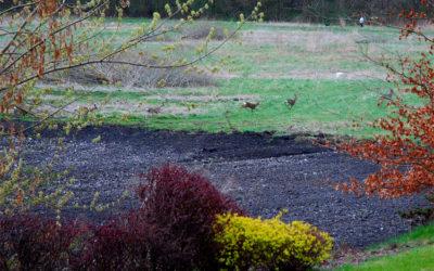 Dzień Ziemi 2007 na Osiedlu Brzeziny