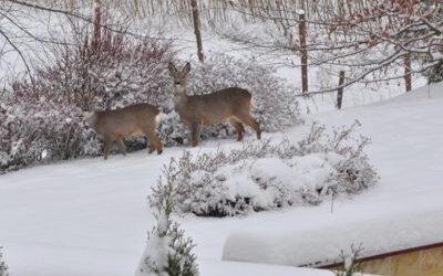 Brzeziny zimą – grudzień 2010